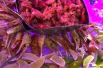 Los-Reyes-seafood.1